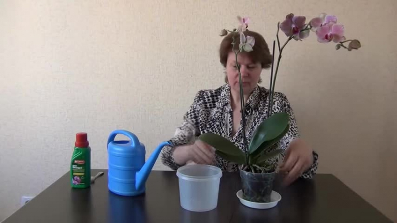 Как подкормить орхидею в домашних условиях видео