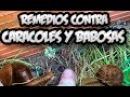 10 Metodos Contra Los Caracoles Y Babosas    Caseros Y Ecologicos    La Huertina De Toni