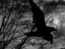 Эдгар Аллан По - Ворон (The Raven)