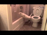 Video: Cat Attempts To Poop In Toilet and Fails - A Funny Video on KillSomeTime