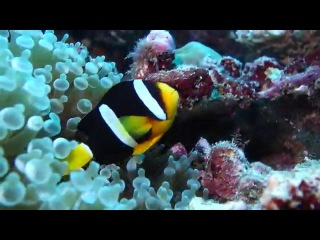 Diving on Maldives, Baa atoll, Reethi Beach Resort