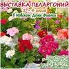 Выставка пеларгоний 10-12 сентября 2015