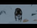 Белый плен _( 2006)  Фильм основан на реальных событиях....