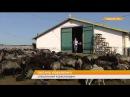 Овцеводы развивают зеленый туризм в Одесской области