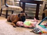 Sophie the Boxer and her Baby