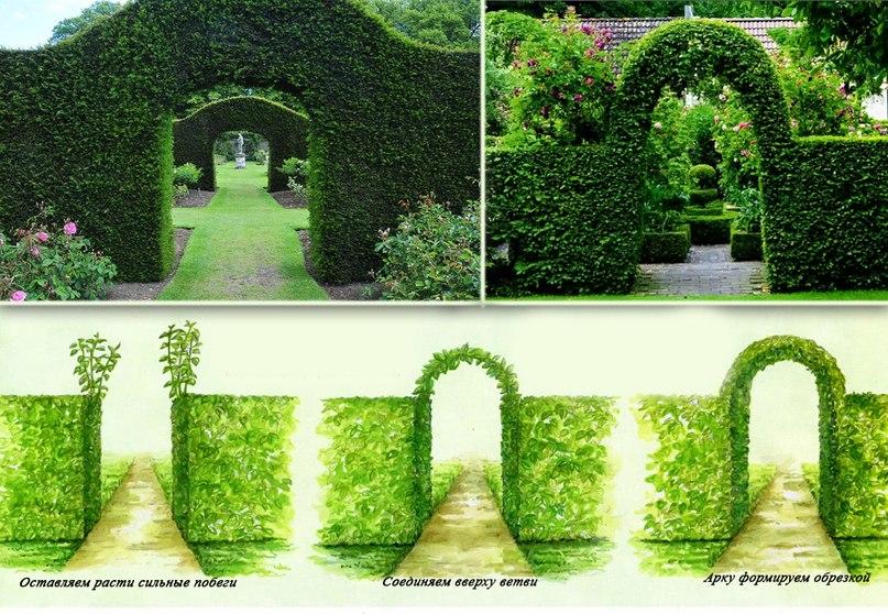 Арка из многолетних декоративных деревьев и кустарников