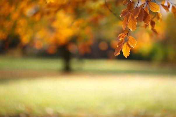 Осень то время года когда люди