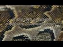 4 способа имитации змеиной кожи
