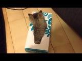 Котята в коробке из-под салфеток