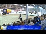 Френк Джесперс - оценка молодых лошадей