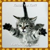 скачать игру какой ты кот - фото 5