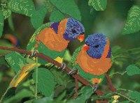 """Набор для вышивания бисером """"попугаи"""", 38.1x28.4 см, бисер тайвань, Светлица"""