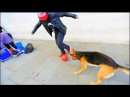 MAN vs DOG - Sean Garnier vs Chien - Panna London Pt1