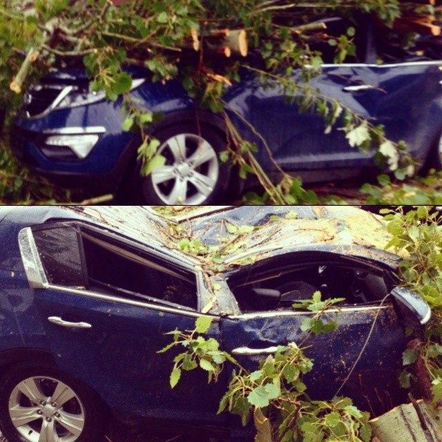 В сети появилось ВИДЕО момента падения дерева на автомобиль Kia в Таганроге на ул. Дзержинского! 18+