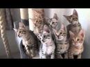 котята синхроно качают головой