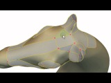 Sketch-Based Generation and Editing of Quad Meshes (SIGGRAPH 2013)