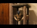 How to DIY heavy Duty Cat Tree - Tower - Climber for a Maine Coon cat