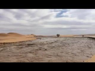 «Час Судного дня не наступит, до тех пор пока на земле арабов снова не разольются реки и не зацветут сады.»
