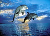 """Пазл """"два дельфина"""". 500 элементов. арт. 30139, Clementoni"""