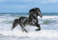 """Пазл """"черный конь в море"""", 500 элементов. арт. 30175, Clementoni"""