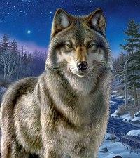 """Пазл """"волк"""", 500 элементов. арт. 30386, Clementoni"""