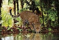 "Пазл ""леопард"", 2000 элементов, Clementoni"