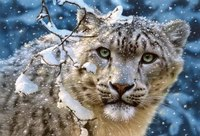 """Пазл """"снежный леопард"""" (1500 элементов), Castorland"""