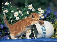 """Пазл """"любопытный котенок"""" (500 элементов), Ravensburger"""