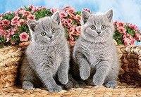 """Пазл """"серые котята"""" (120 элементов), Castorland"""