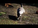 Медоеду на все срать! (Far Cry 4)