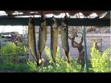 Копчение рыбы в домашних условиях или на даче
