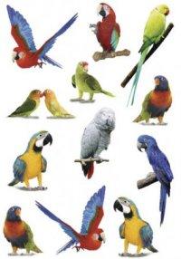 """Наклейки """"цветные попугаи"""", Herma"""