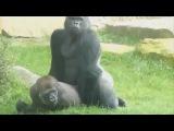 Смешное видео 2014 - Спаривание животных сумасшедшее видео Part1