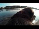 SJCAM SJ4000 WIFI - (JONCAM.RU) - Собака в парке