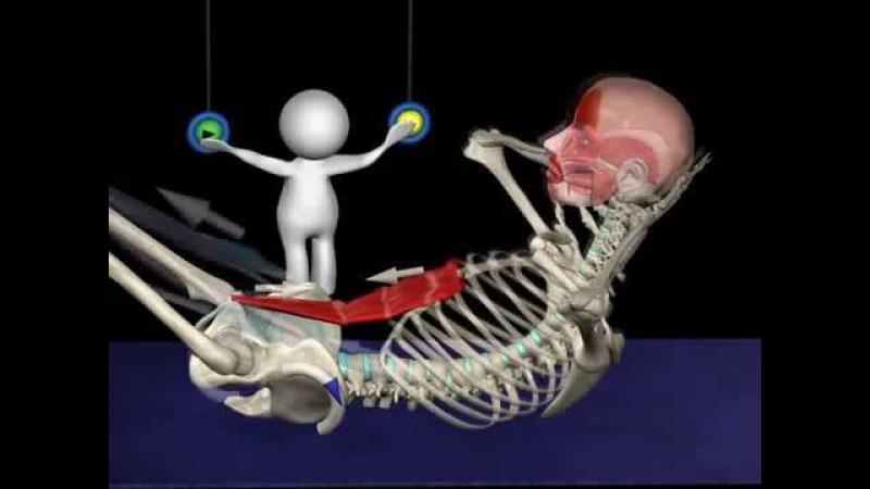 Анатомия упражнений на пресс