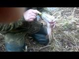 Pike on Lure Щука на джерк GoodCat Tiger fire