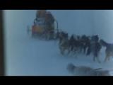 Антарктика(Япония) Белый плен)