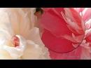 Самая красивая музыка для Души и пионы Саксофон Трубач Peony flowers Podryga on