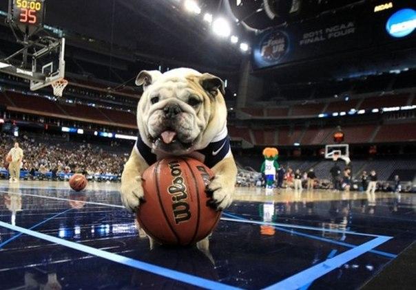 прогноз матча по баскетболу Крайльсхайм - Феникс Хаген - фото 4