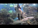Shark feeding Кормление акул القرش التغذية