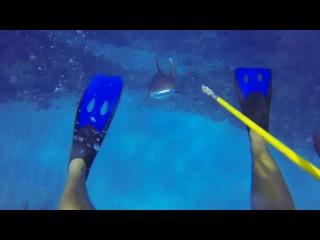 Нападение акулы в Карбиском море глазами дайвера