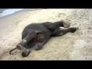 Слоненок на пляже