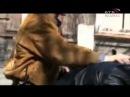 «Солдаты. Здравствуй, рота, Новый год!» (2004) trailer