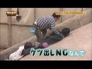 120116 TORE HEY SAY JUMP SKE48 Jurina Shiori 2 4
