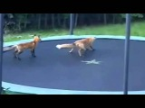 Москаль не скачет   кто не скачет тот москаль! очень смешное видео 1