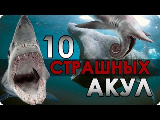 10 Самых страшных АКУЛ!