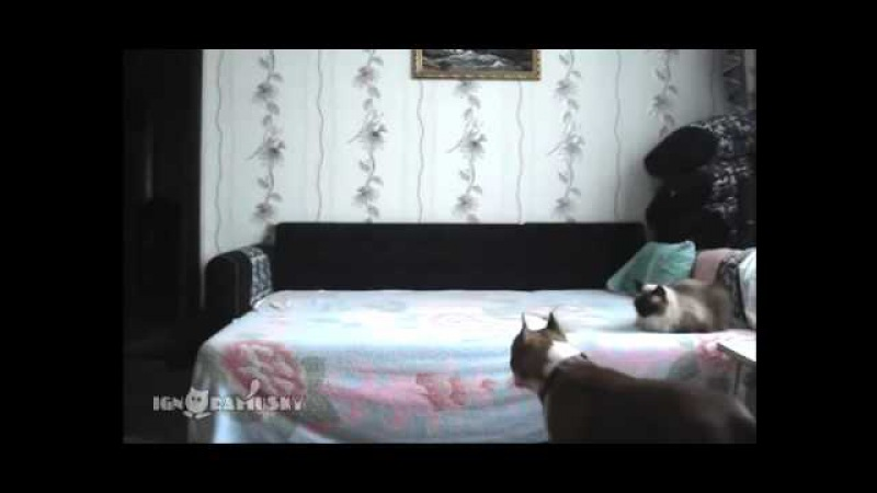 Когда собака остается дома одна Съемка скрытой камерой