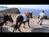 Современная Греция. Стройка. Ишаки и мулы в работе.