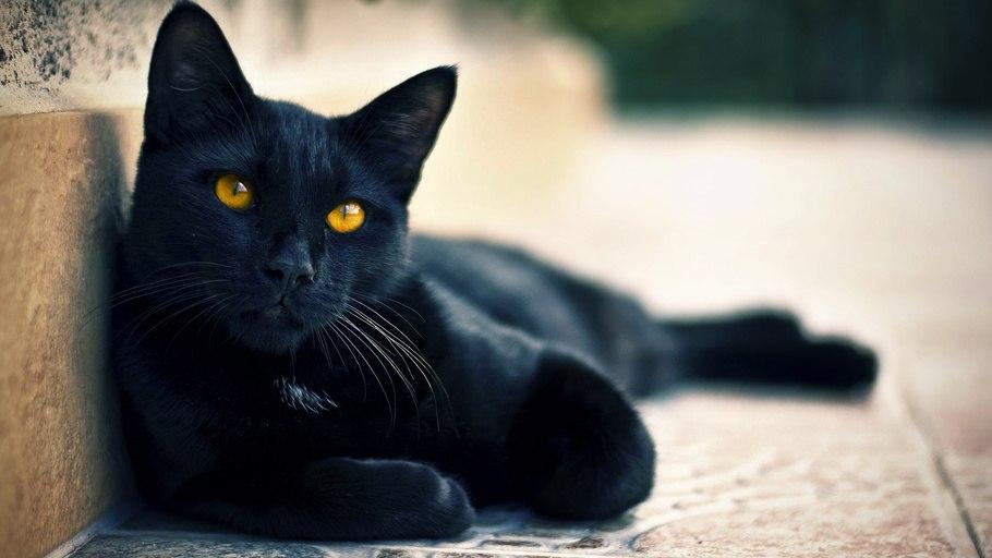 Нужно ли делать прививки котам каждый год
