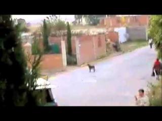 Unintelligible empanada truck VS Dog - Harmonizator